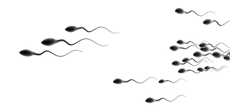 Sperm Motility and Sperm Count